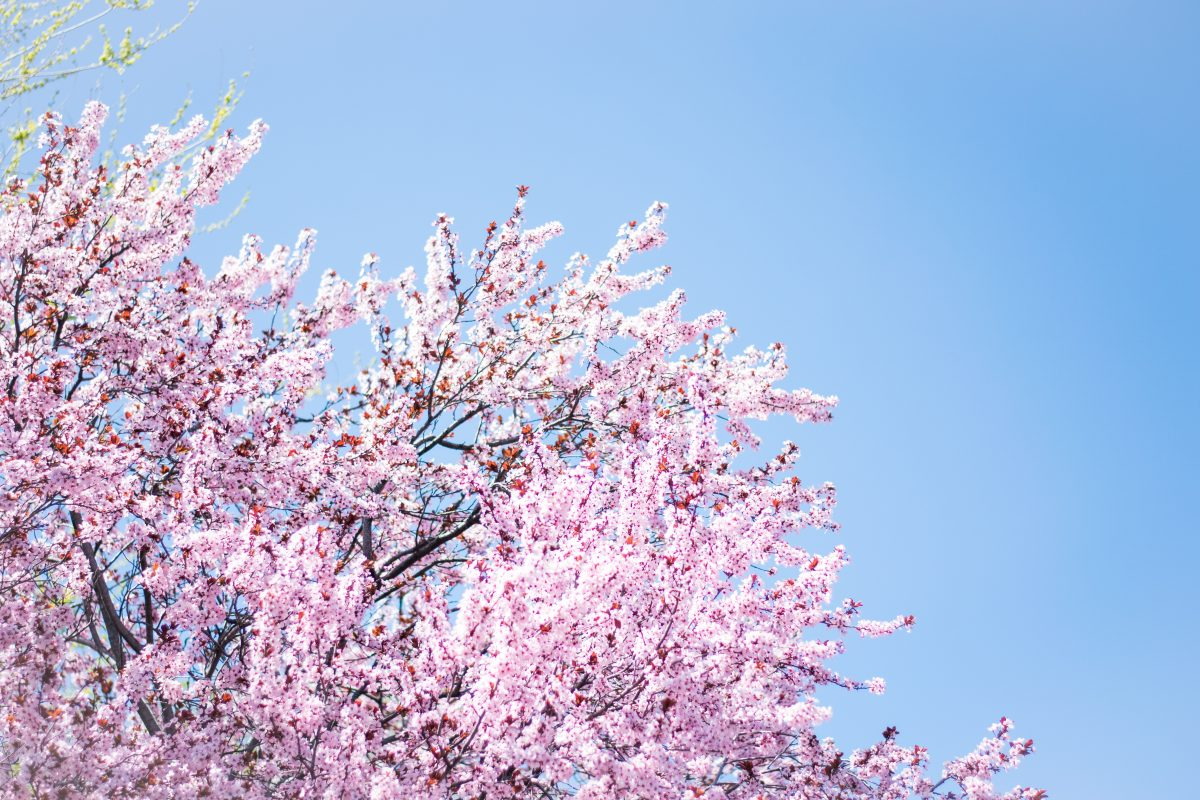 """Rev. Carole Martignacco, """"To what purpose, April?"""""""