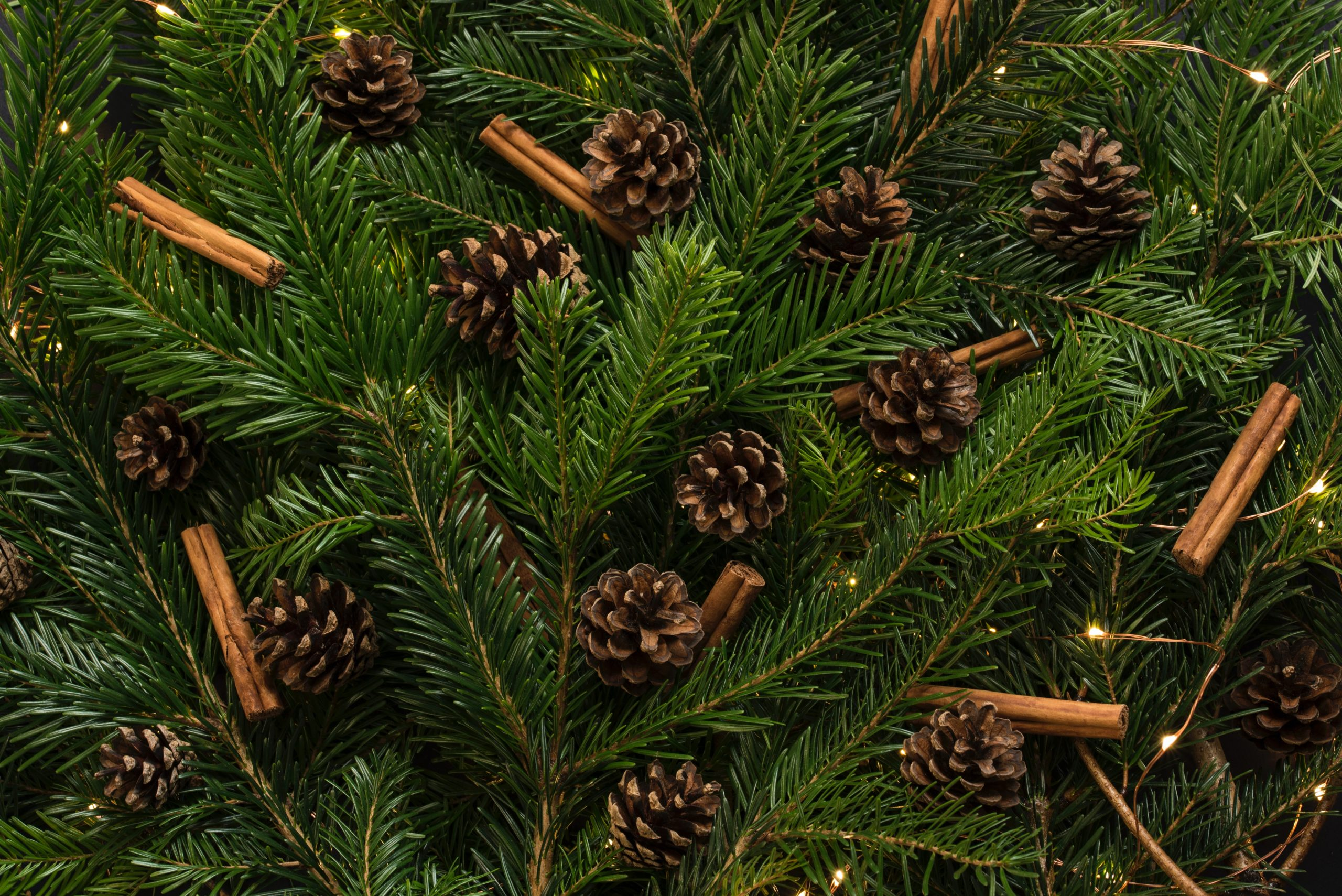 brown pine cones in pine tree